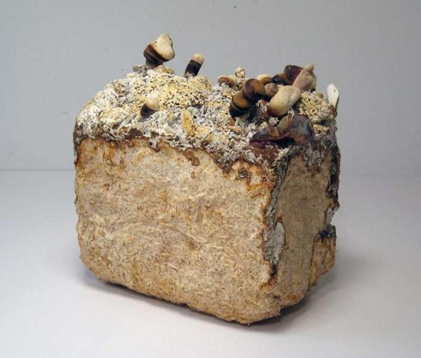 Mushroom bricks, which are stronger (and probably tastier) than concrete.Image: Philip Ross