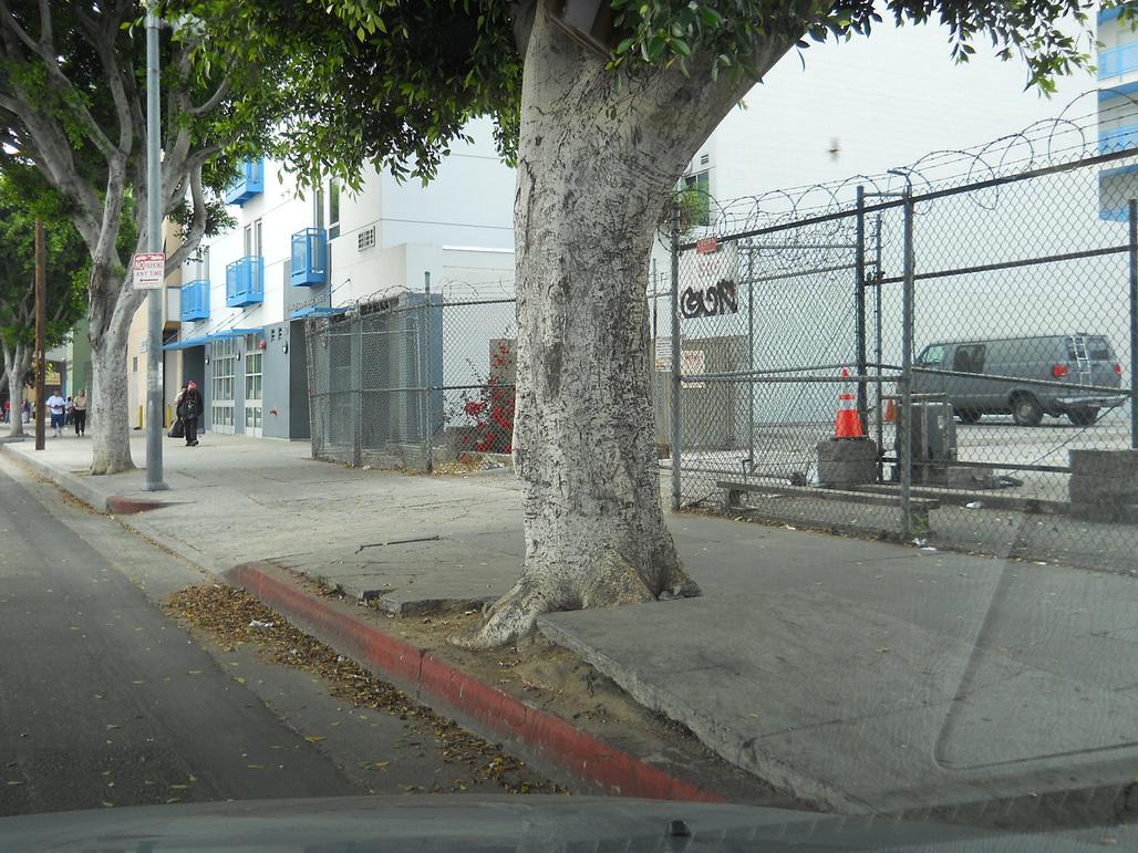 Photo via treesonsanpedrostproject.com