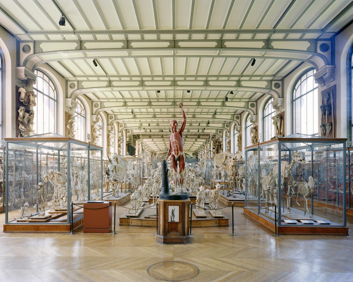 Richard Barnes, Flayed Man, Museum of Comparative Anatomy, Paris, 2005