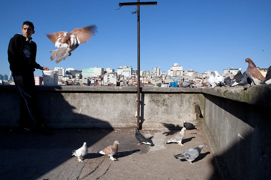 Murat exercises his brother's pigeons on the top of a building, where they have a loft in Tarlabasi.
