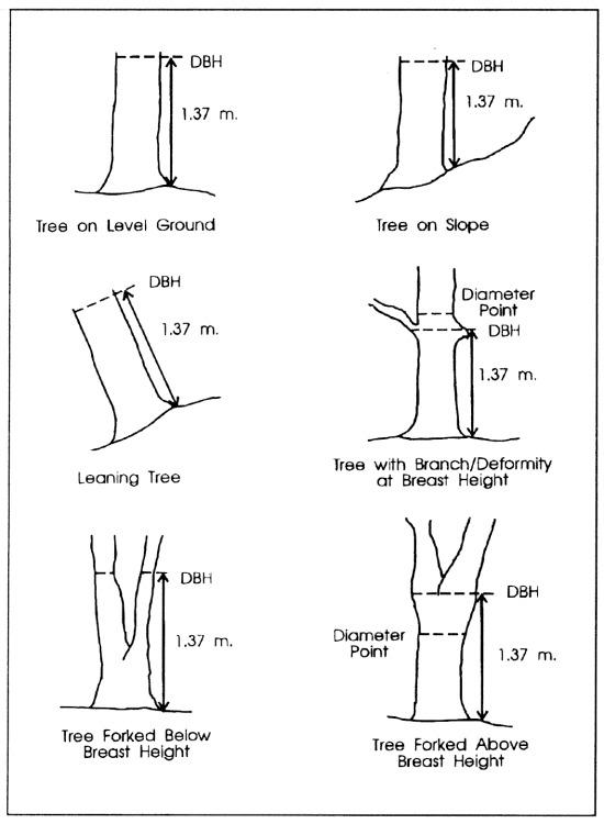 how to measure tree diameters via Barry Lehrman