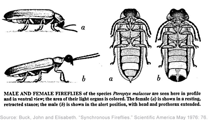 Image from research by John and Elisabeth Buck