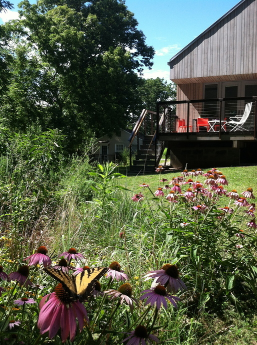 New Norris House (native landscaping in summer)