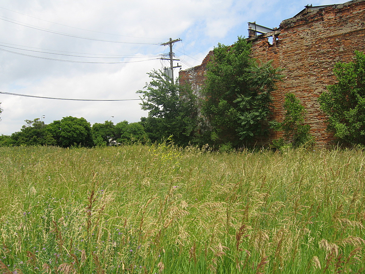 Over grown vacant lot on Michigan Avenue