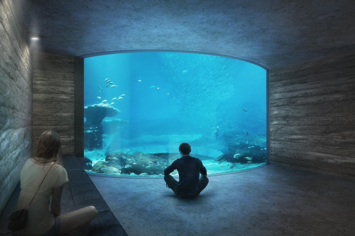 Cinematic View of Schooling Fish Tank (Nightnurse Images)