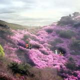 Azalea on sunny slope hill © West 8 urban design & landscape architecture