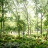 Eco Spine Park Azalea Garden © West 8 urban design & landscape architecture
