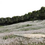 Mandang meadow © West 8 urban design & landscape architecture
