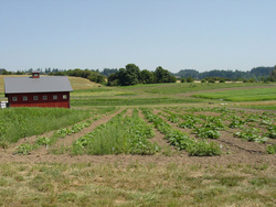 Farm Plus: Hybrid Agricultural Landscapes