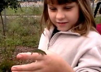 Learning + Landscape: Woodville Elementary School Wildflower Garden