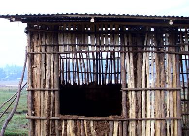 Habitat for Humanity Global Village Volunteer