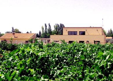 House among vineyards