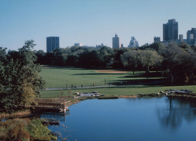 The Great Lawn Reconstruction, Central Park
