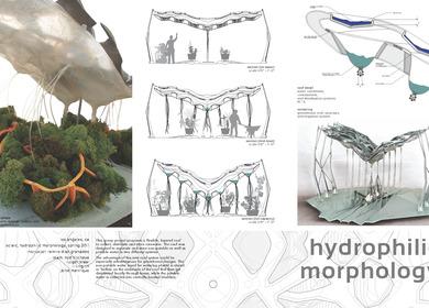 Hydrophilic Morphology