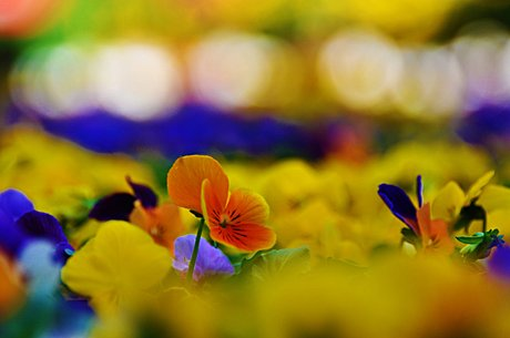 Very pleased with my photos of Old Town (Chicago) from this morning. Crazy awesome flower bokeh.