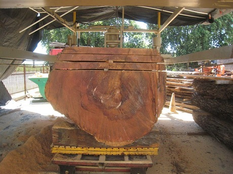 Reclaimed Elm tree transformation