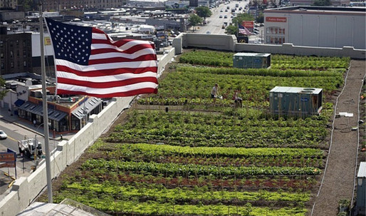 Rooftop Farms to Deal with Growing Food Crisis