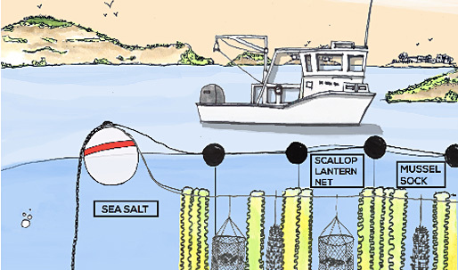 """Fuller Challenge winner says his GreenWave 3D ocean farm concept """"could feed the world"""""""