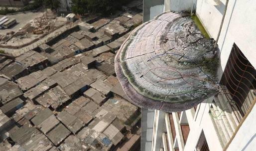 Powering Mumbai with Magic Mushrooms
